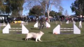 Siberian Husky Agility Rowdy Akc Jww 2/27/11.mpg