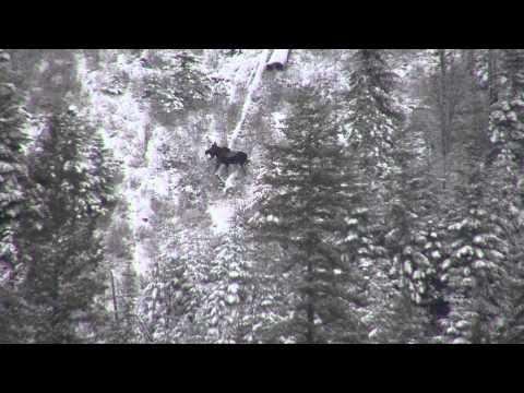 338 Edge Long Range Hunting Sams 2013 moose hunt