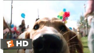 A Dog's Purpose (2017) - Doggie Matchmaker Scene (3/10) | Movieclips