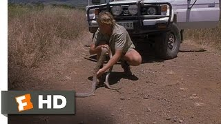 Video The Crocodile Hunter: Collision Course (7/10) Movie CLIP - King Brown Snake (2002) HD download MP3, 3GP, MP4, WEBM, AVI, FLV September 2017