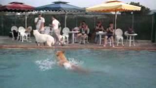 828大型犬組Checker 第一節時間:9.4秒第二節時間:10秒第三節時間:8.8秒...