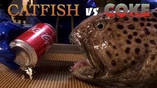 Catfish vs Coke - Not Wolf Eel