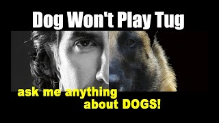 My Rescue Dog Won't PLAY TUG - ask me anything - Dog Training Video