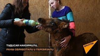 Доброе видео: спасение хромого жеребенка в Абхазии