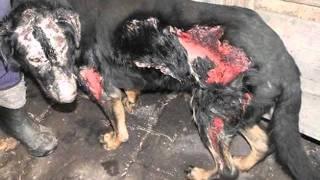 Zwierzęta i ludzie - zabijanie