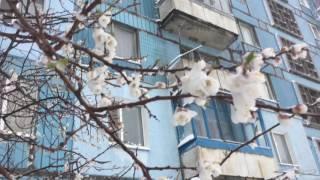 Весенний день в Синельниково