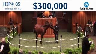 Before They Were Stars: Champion AMERICAN PHAROAH at the 2013 Saratoga Sale!