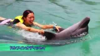 ドルフィントレーナー体験、最もイルカと泳ぎ遊べるプログラム。 最初の...