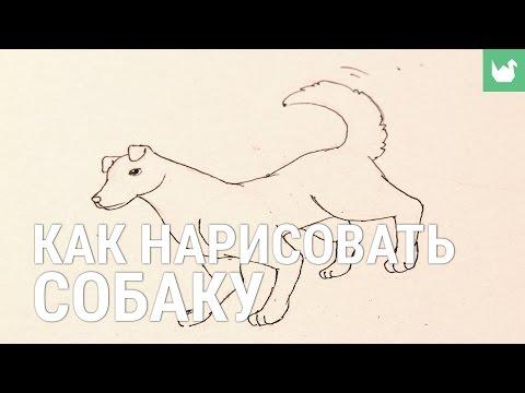 Как Нарисовать Собаку Макса (Тайная жизнь домашних животных) | Рисуем Макса поэтапно