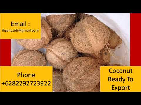 +6282292723922 coconut supplier, wholesale, buy Bulk price for export to  Dominica