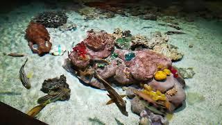 Документальный фильм о морских животных