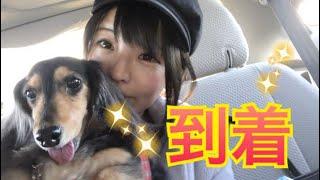 【meruの日常】アメリカ着いたよ! thumbnail