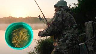 Ясное утро Донки поплавочка Сазаны караси раки Здорово на рыбалке