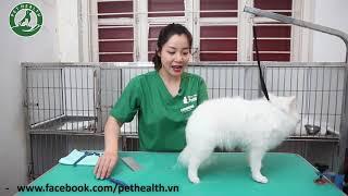 Hướng Dẫn Tắm Cắt Cho Thú Cưng Tại Nhà - Bài 8.2 ( Cắt tỉa, chăm sóc lông cho Phốc Sóc-Pomeramian )