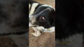 DOG THE END OF LIFE