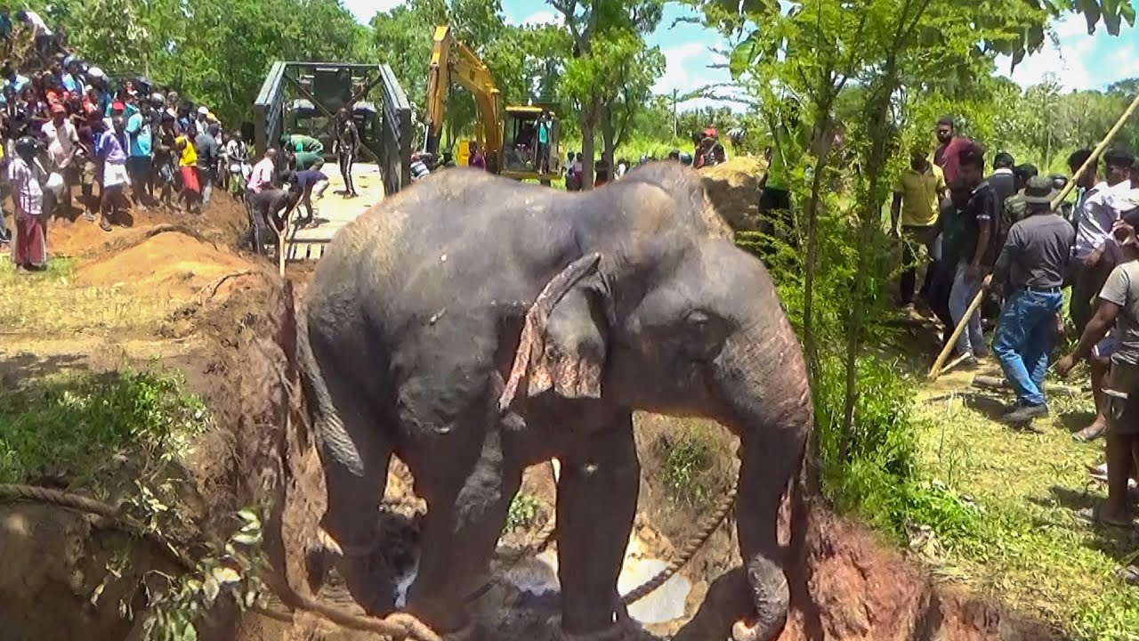 Villagers rescues drowning elephant from deep well and get a free pass to a National Park