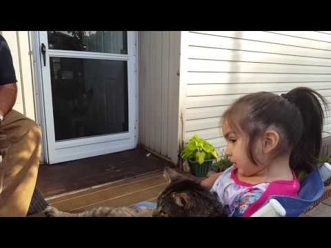 MY BABY SISTER LOVES MY OLD CAT MY FIRST VIDEO