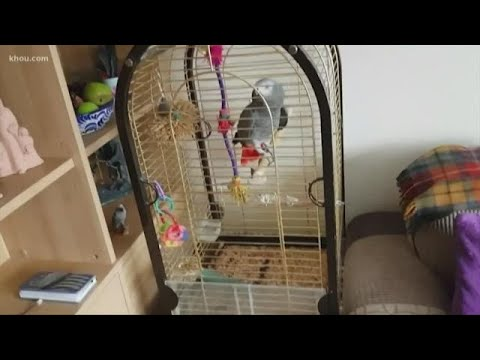 Parrot in England mimics smoke alarm so well, someone calls the fire department