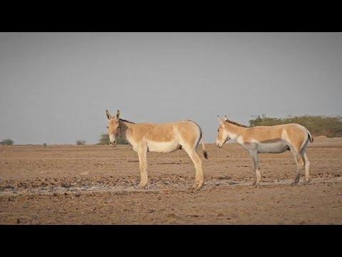 Inde : la vie sauvage du Petit Rann de Kutch - le mag
