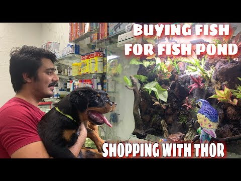 LET'S DO SHOPPING FOR FISH POND WITH THOR |VLOG# 12 | ROTTWEILER PUPPIES PLAYING |AQUARIUM FISH SHOP