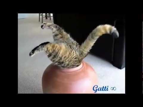 Gatti divertenti :3