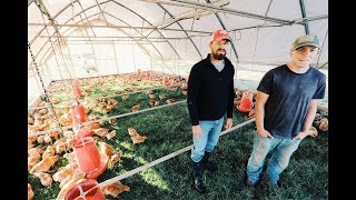 Game Changer: 600 Chickens in One Coop