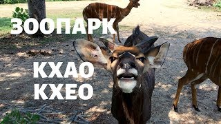 Зоопарк Кхао Кхео. Открытый зоопарк в Паттайе
