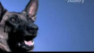Time Warp - Dog Catches Hot Dog