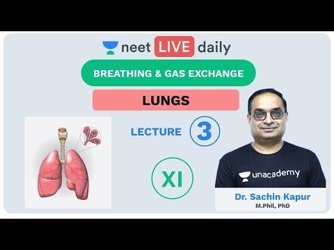 Breathing \u0026 Gas Exchange - Lecture 3 | Unacademy NEET | LIVE DAILY | NEET Biology | Dr Sachin Kapur