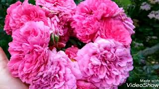 Дача.Цветники и сад в сентябре.