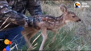 CRYING Fawn Rescued From Hole Reunites With Mom | The Dodo