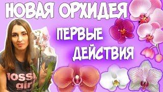 НОВАЯ ОРХИДЕЯ. ПЕРВЫЕ ДЕЙСТВИЯ ПО УХОДУ(Вам подарили орхидею? Или вы купили себе очередную красавицу, усыпанную цветами и бутонами. Как сохранить..., 2016-03-10T07:00:00.000Z)
