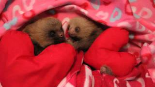 Happy Valentines Day Kristen Bell and Sloth Lovers