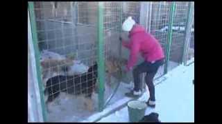 Приют для животных 20 01 14