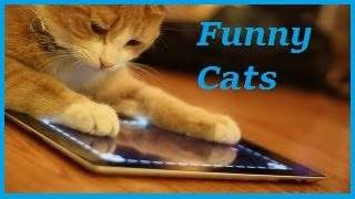 Funny Cat - Funny Cats Video - Funny cats Compilation 2016 - Best Funny Videos #1