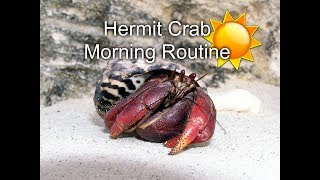 My Hermit Crab Morning Routine