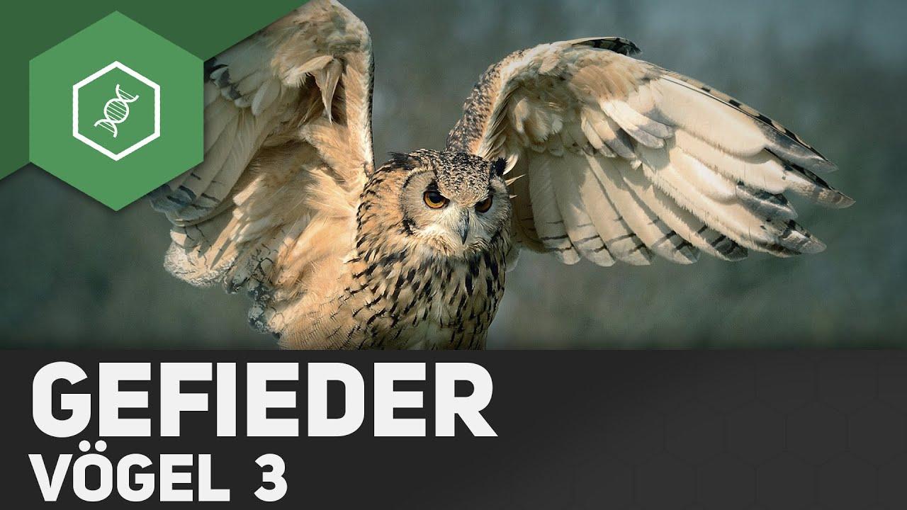 Vögel - Aufbau Gefieder / Vogelfedern - YouTube