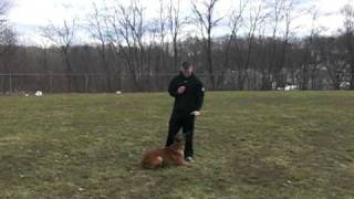 Off-leash K9 Training, Duke
