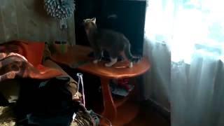 телепортация кота)