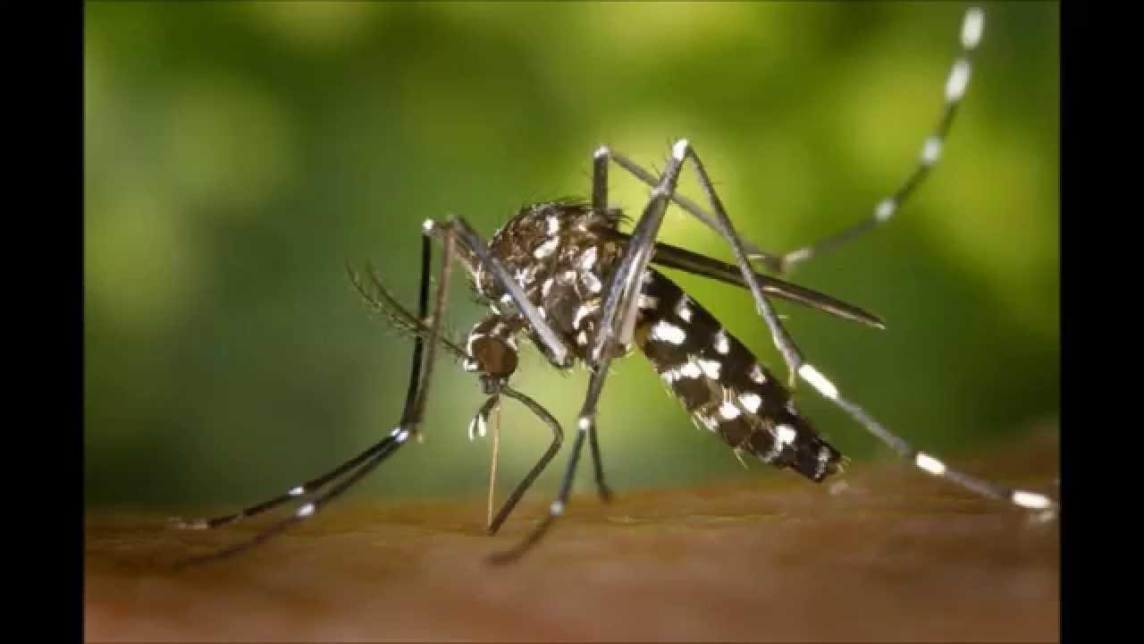 Los sonidos de los insectos sonidos de animales youtube - Como ahuyentar los mosquitos ...