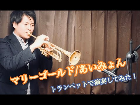 マリーゴールド【トランペットで演奏してみた!】