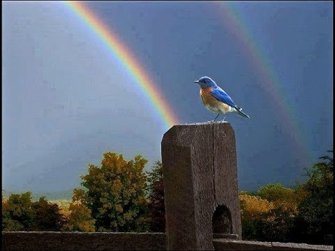 Somewhere Over the Rainbow   What a Wonderful World  Israel KamakawiwoOle with lyrics