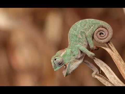 Herbie Hancock - Chameleon (short version)