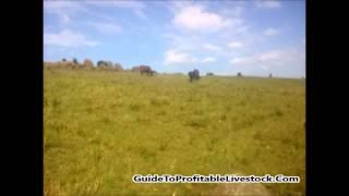 How Do You Start a Livestock Farm In A Rocky Farm Land