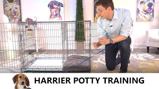 Harrier Potty Training from WorldFamous Dog Trainer Zak George  How to Potty Train a Harrier Puppy