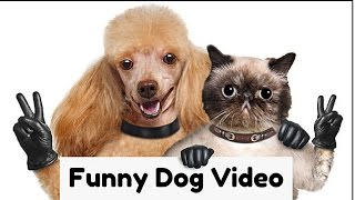 Funny Dogs Video Compilation 2017 ( Dog,Puppies,Terrier,Poodle,Rottweiler,Pug) ????????????????????????????????????????