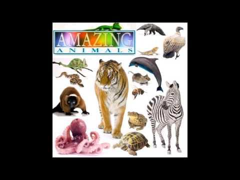 Henry's Amazing Animals Score: Main Theme