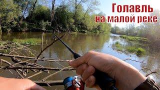 ГОЛАВЛЬ на Красивейшей Малой реке Рыбалка на спиннинг в Мае 2020