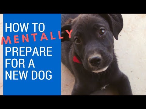 How to Adopt a Dog Ep. 1: How to Mentally Prepare for a New Dog
