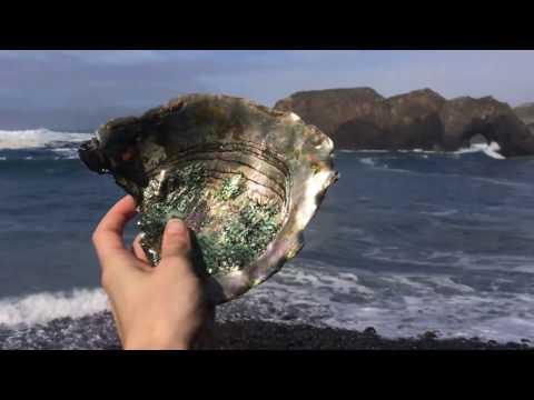 More Abalone Shells